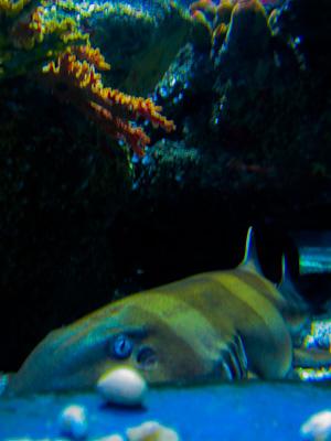 Cute Shark (1 av 1)
