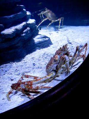 Krabba Sea Life (1 av 1)