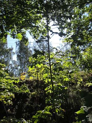 Löv Falun (1 av 1)