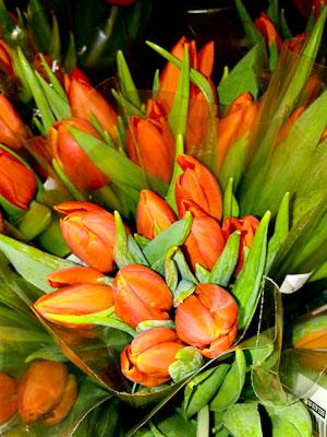 Röda Tulpaner (1 av 1)