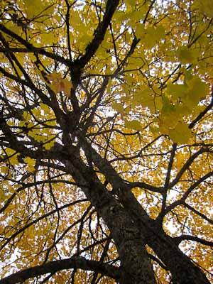 Skeer_October