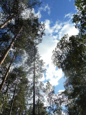 Skog Falun-Borlänge (1 av 1)