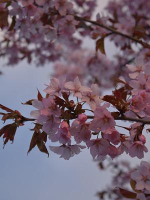 Träden Blommar (1 av 1)