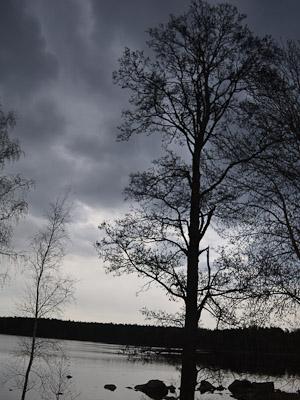 Tree Falun