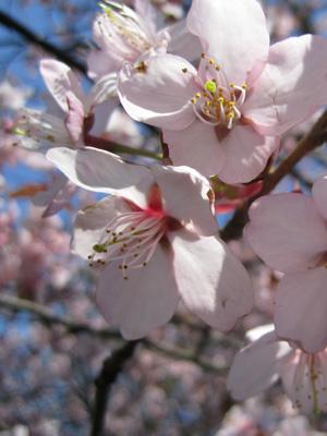 blommor_goteborg