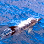 delfin_anneli_fors