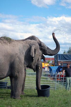 Elephants from Circus Maximum