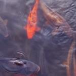 fish_blog