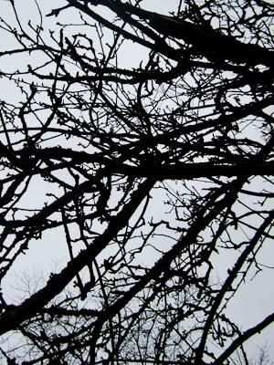 grenar (1 av 1)