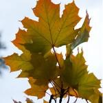 leaf_autumn