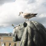 lion_bird_gothenburg