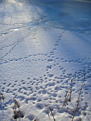 mönster i isen (1 av 1)