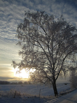 tree winter (1 av 1)